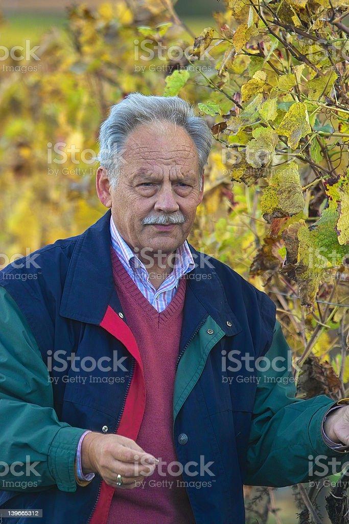 Mature winemaker royalty-free stock photo