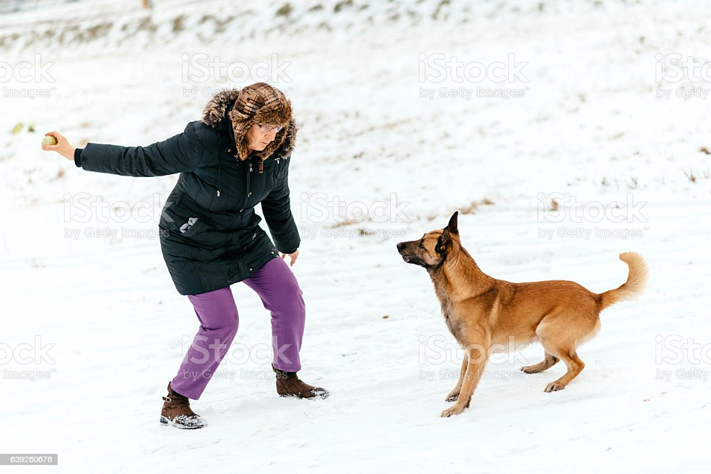 Mature woman and her Belgian shepherd dog playing in snow stock photo