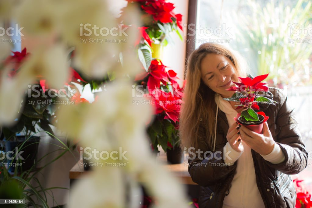 Mature Woman Buying Poinsettia Flowers At The Flower Shop