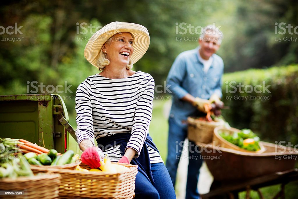 Mature Woman Harvesting Vegetables In Garden. stock photo