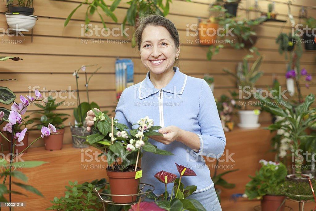 mature woman looks Clerodendrum thomsoniae stock photo