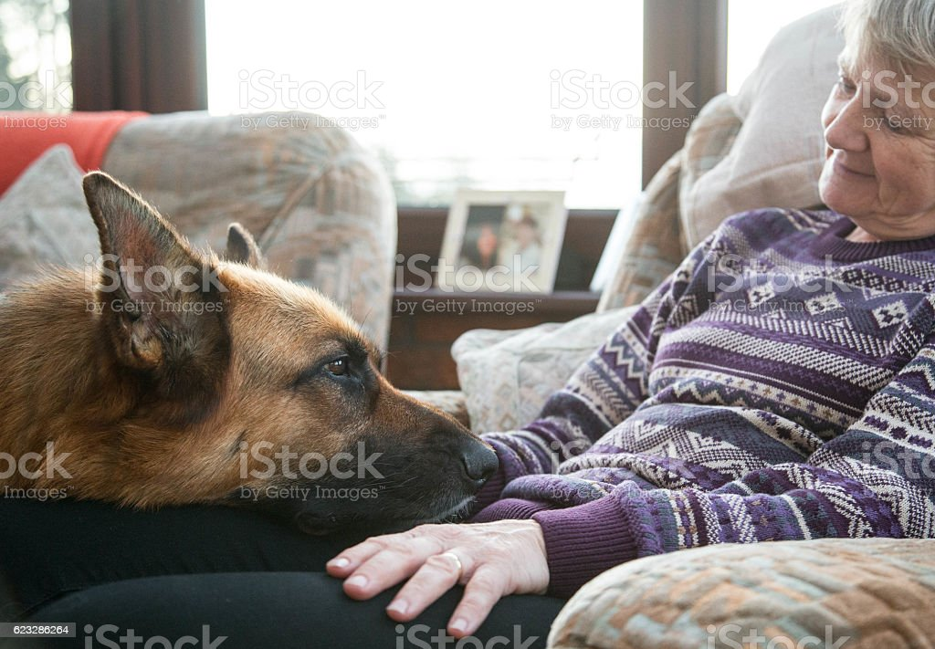 Mature woman relaxing with German Shepherd Dog stock photo