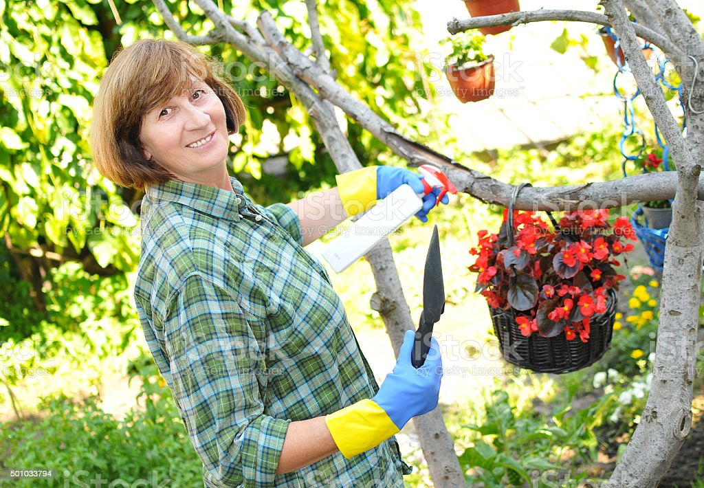 Mature woman taking care of garden and flowers in summertime stock photo