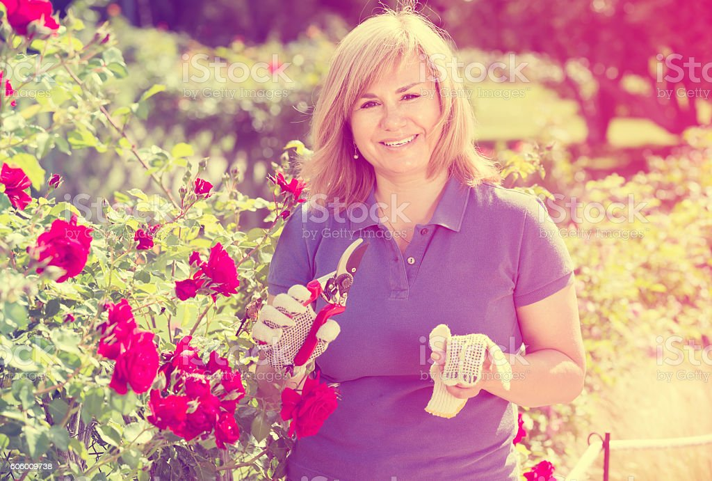 mature woman taking care of red roses stock photo