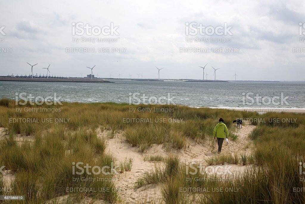Mature woman walking dog in dunes stock photo