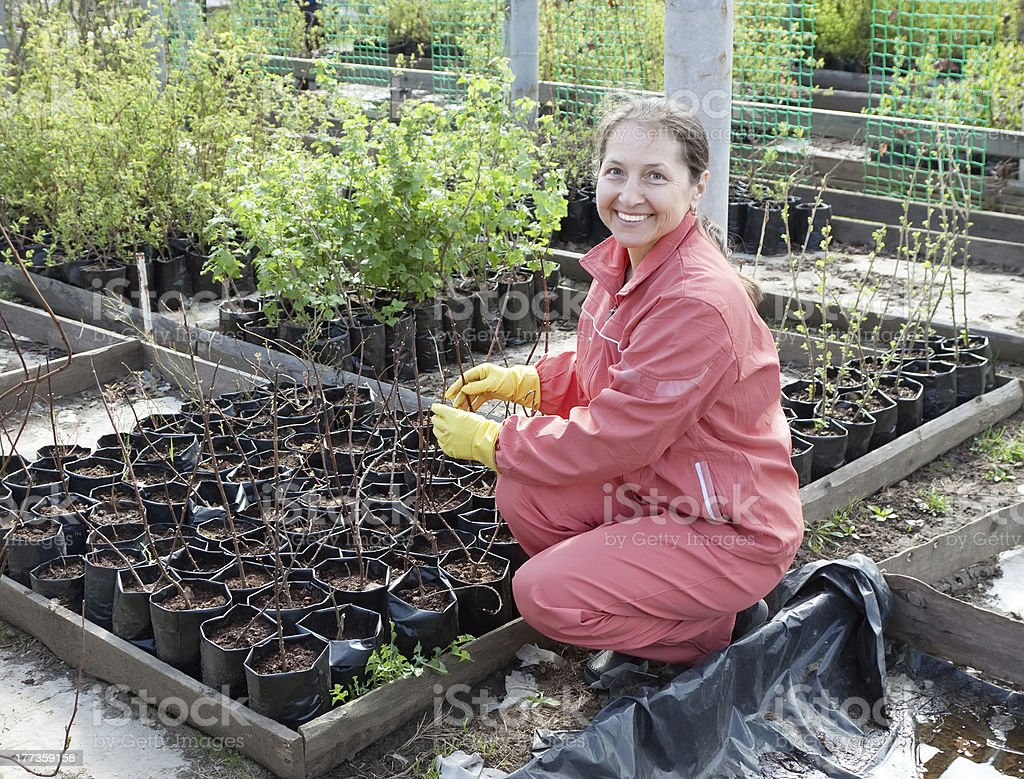 Mature woman with sprouts stock photo