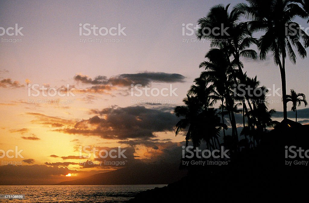 Maui Hawaii island palm tree sunset stock photo