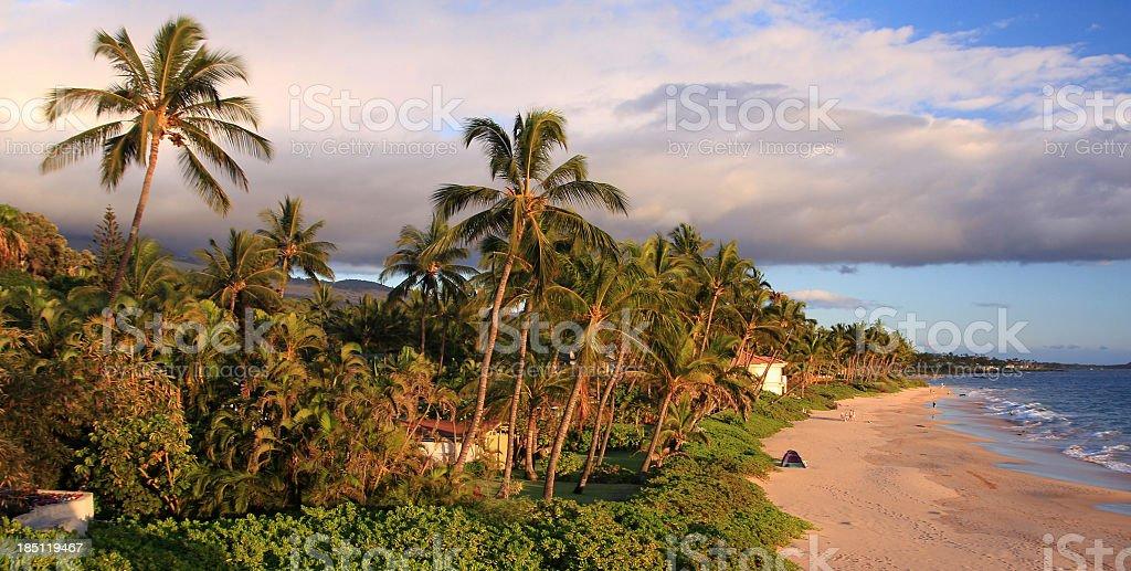 Maui Hawaii Pacific ocean palm tree Beach panorama stock photo