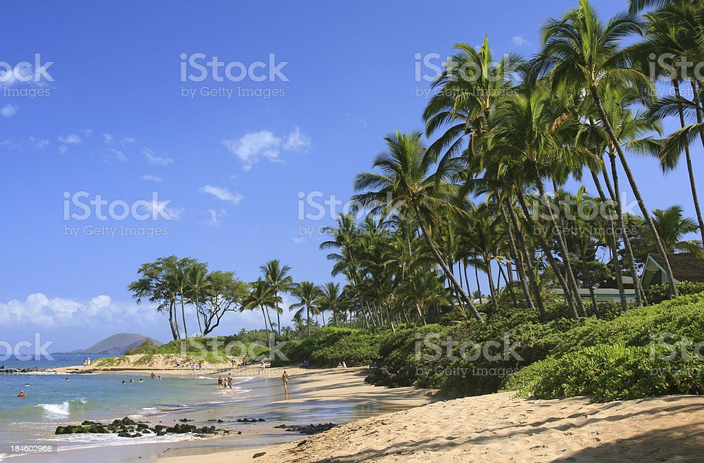 Maui Hawaii Pacific ocean palm tree beach stock photo