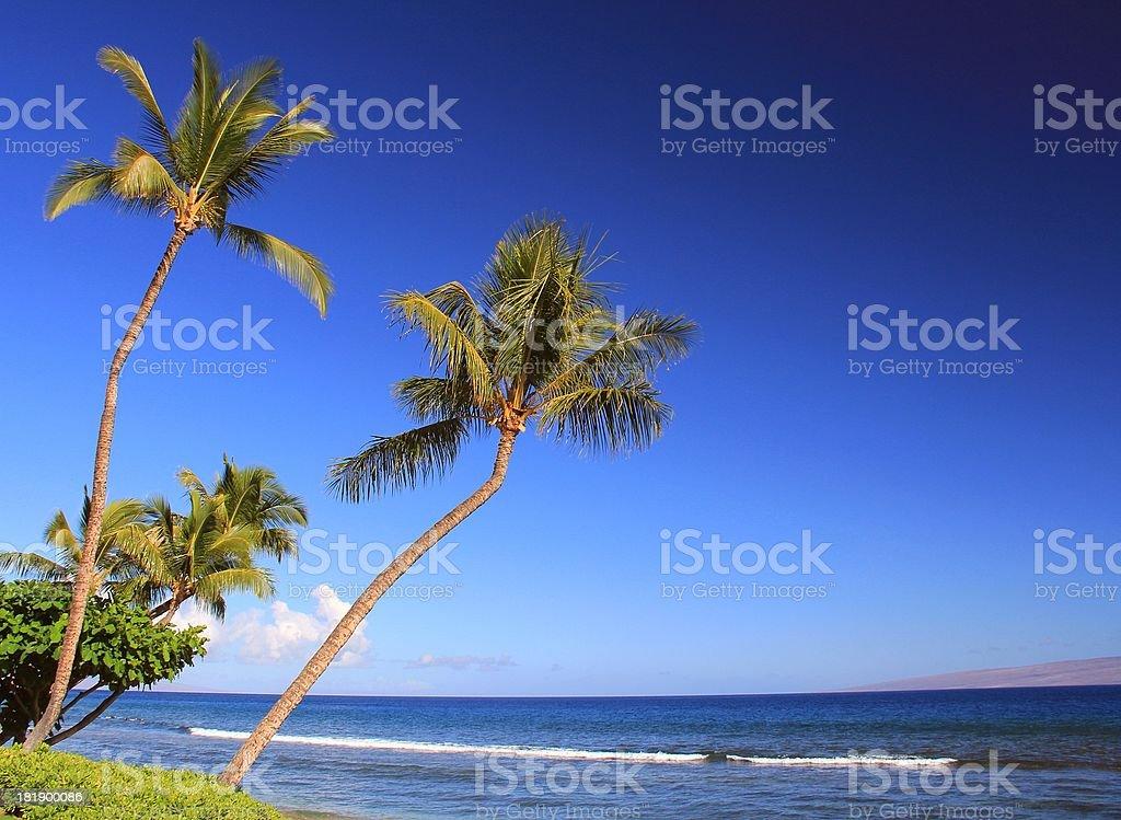 Maui Hawaii Pacific ocean, palm tree beach scenic royalty-free stock photo