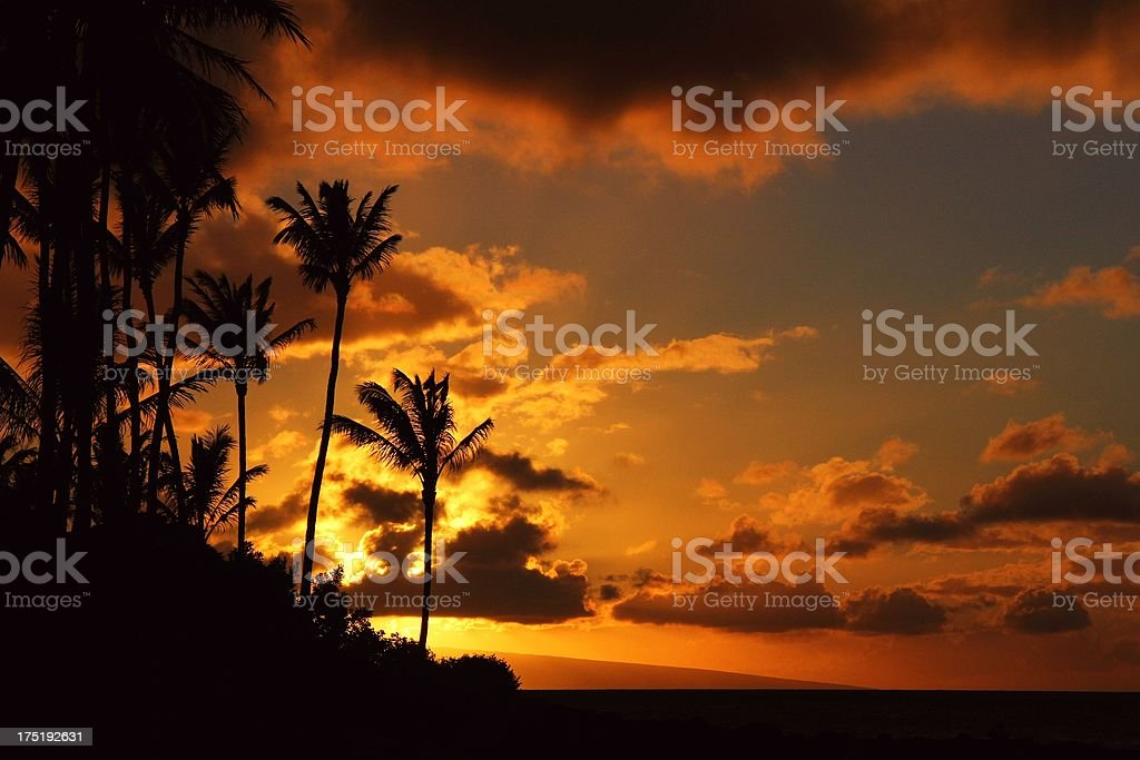 Maui Hawaii Pacific ocean palm tree sunset scenic royalty-free stock photo