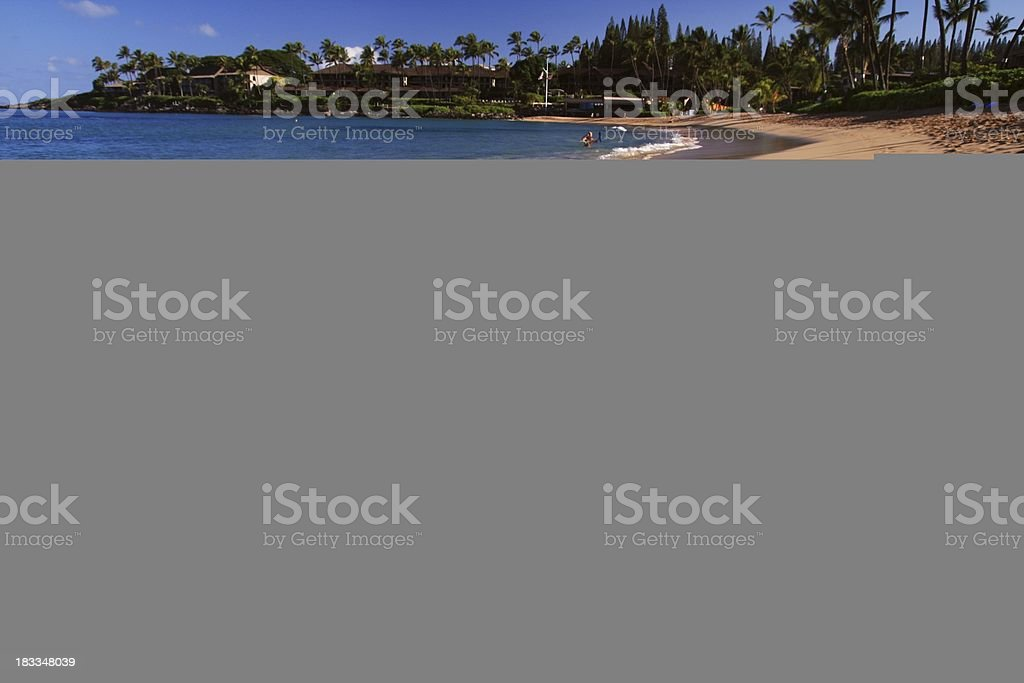 Maui Hawaii palm tree beach Pacific ocean scenic stock photo