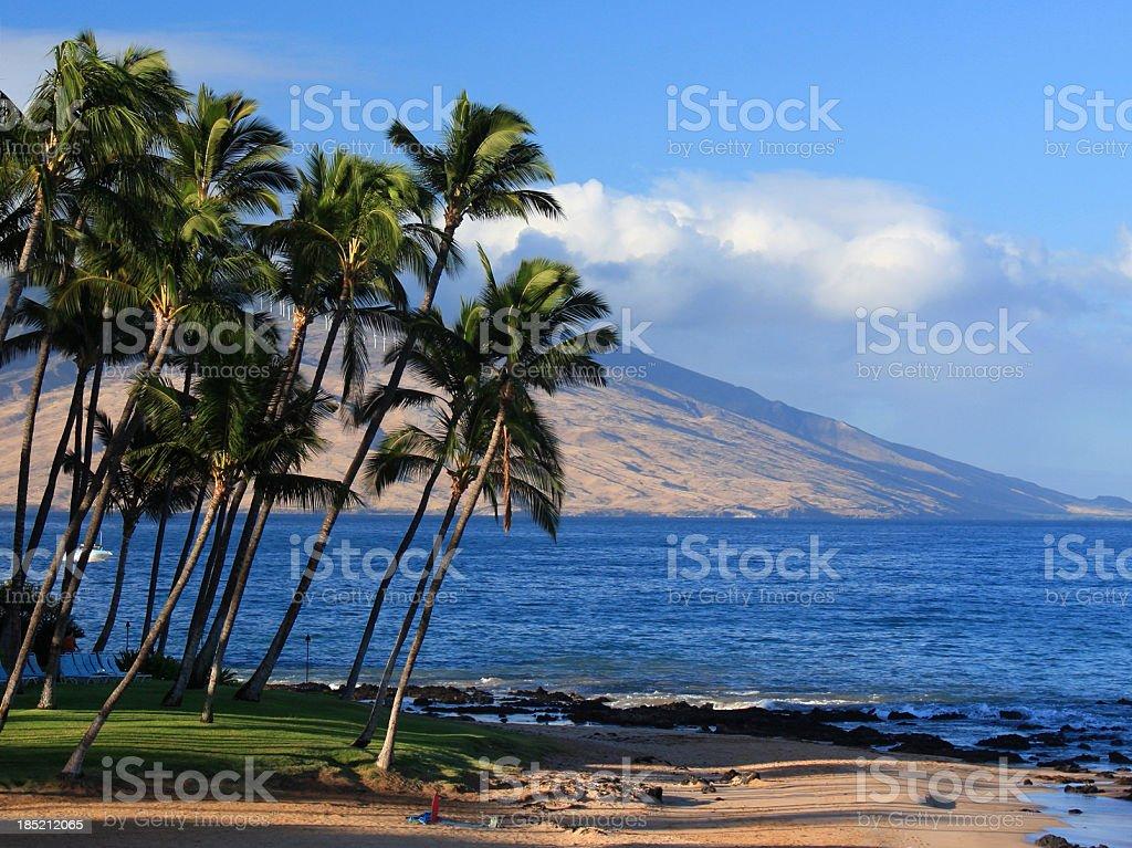 Maui Hawaii, Palm tree, Pacific ocean, resort hotel, beach scenic royalty-free stock photo