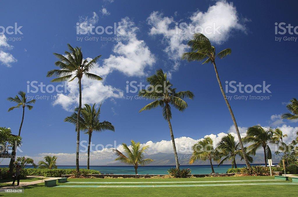 Maui Hawaii palm tree Pacific ocean resort hotel scenic royalty-free stock photo
