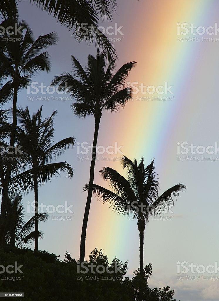 Maui Hawaii palm tree rainbow scenic royalty-free stock photo