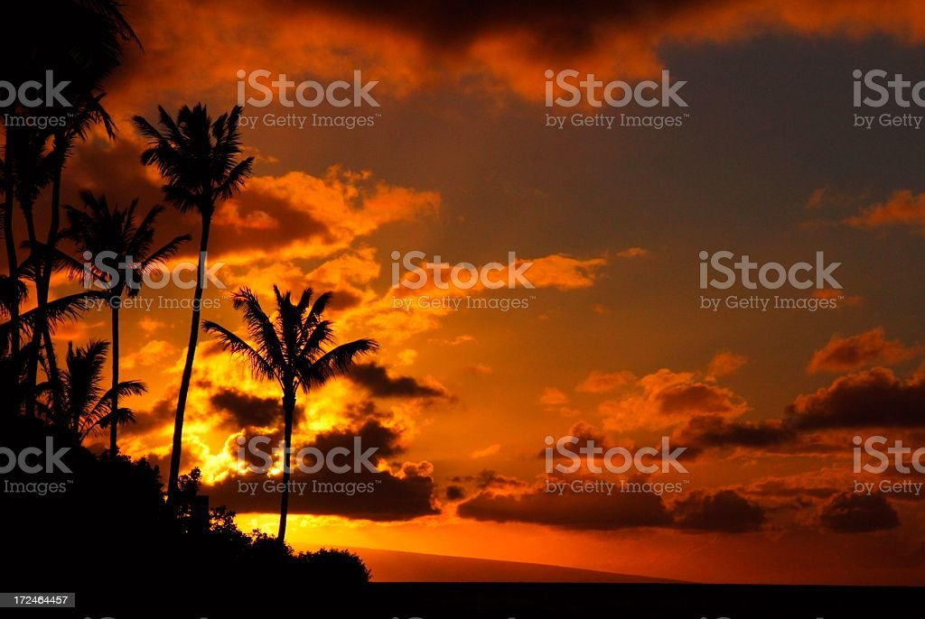 Maui Hawaii palm tree sunset scenic royalty-free stock photo