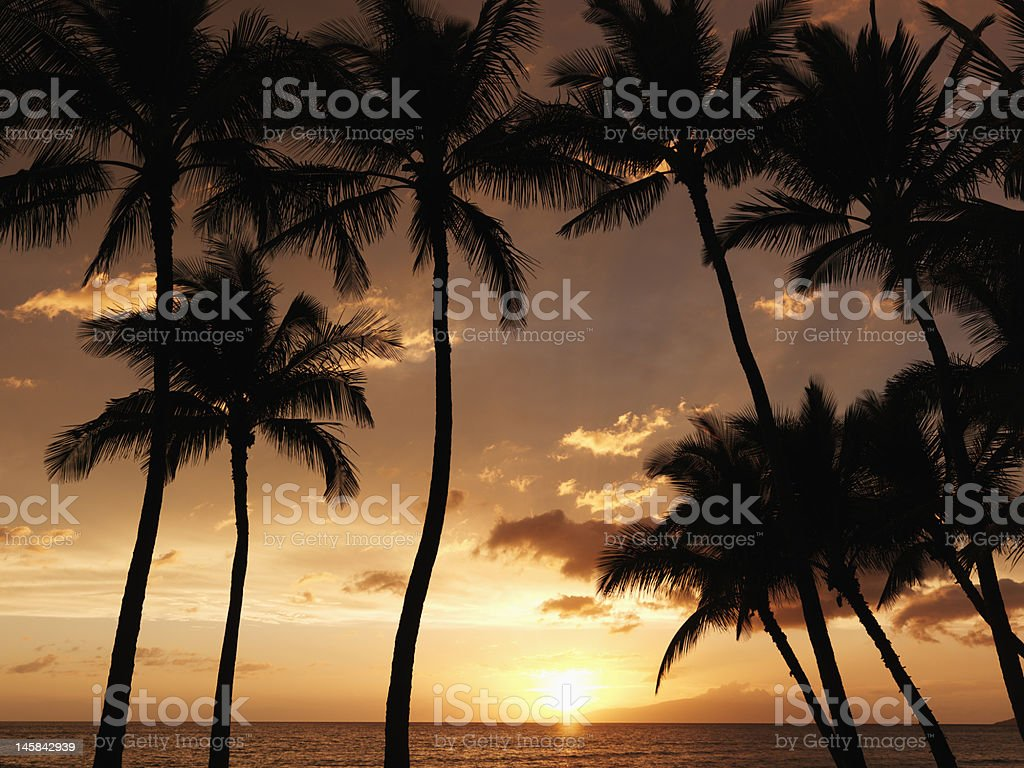 Maui palm trees at sunset. royalty-free stock photo