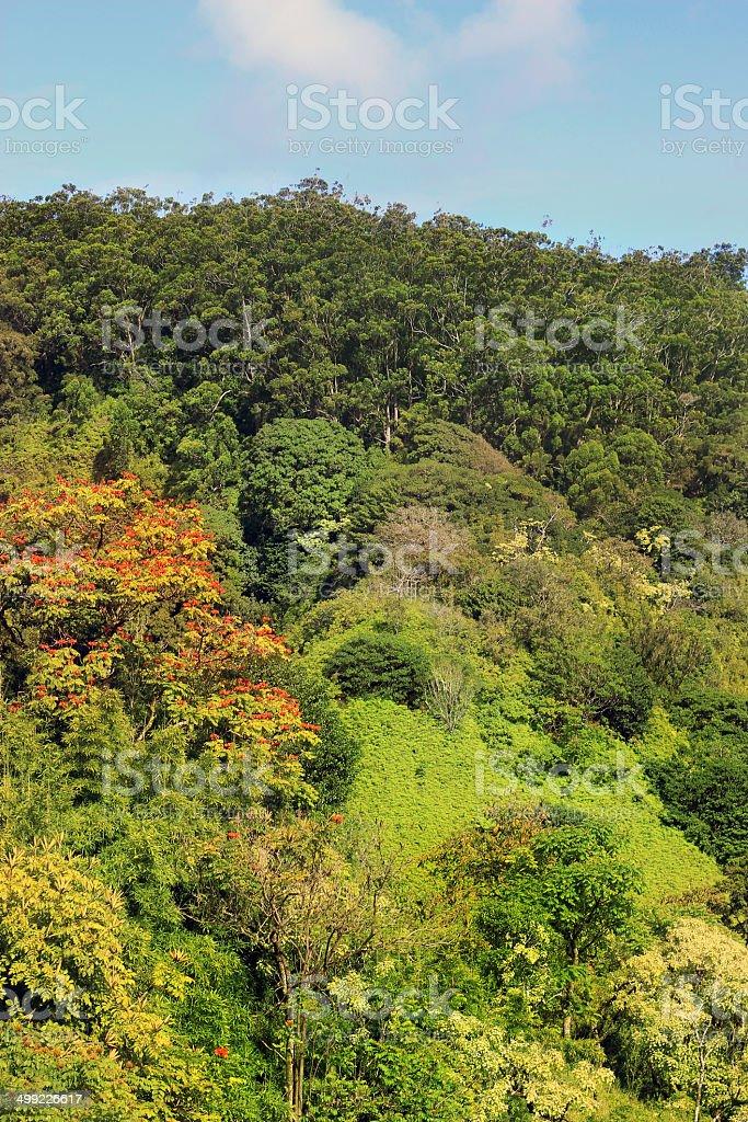 Maui Rain Forest royalty-free stock photo