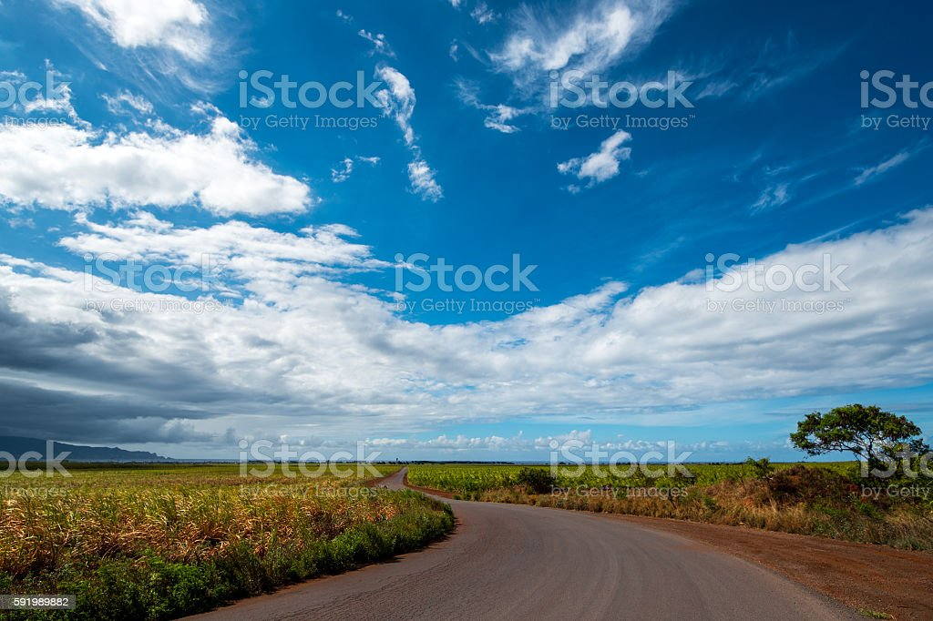 Maui Sugar Cane along Winding Road stock photo