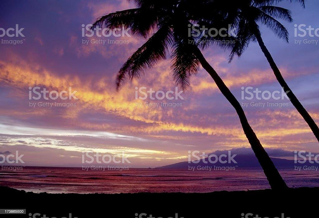 Maui Sunset & Palm Trees stock photo