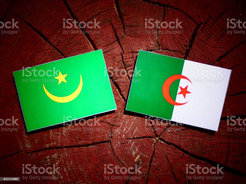 Mauritania flag with Algerian flag on a tree stump isolated stock photo
