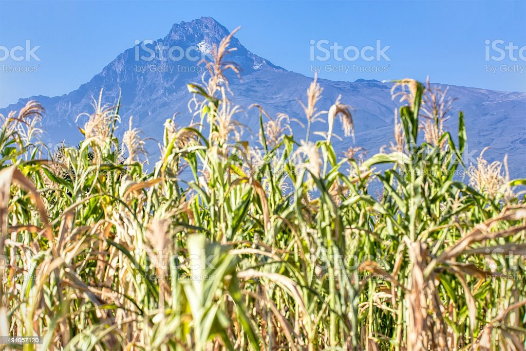 Mawenzi Peak - in the morning with Corns stock photo