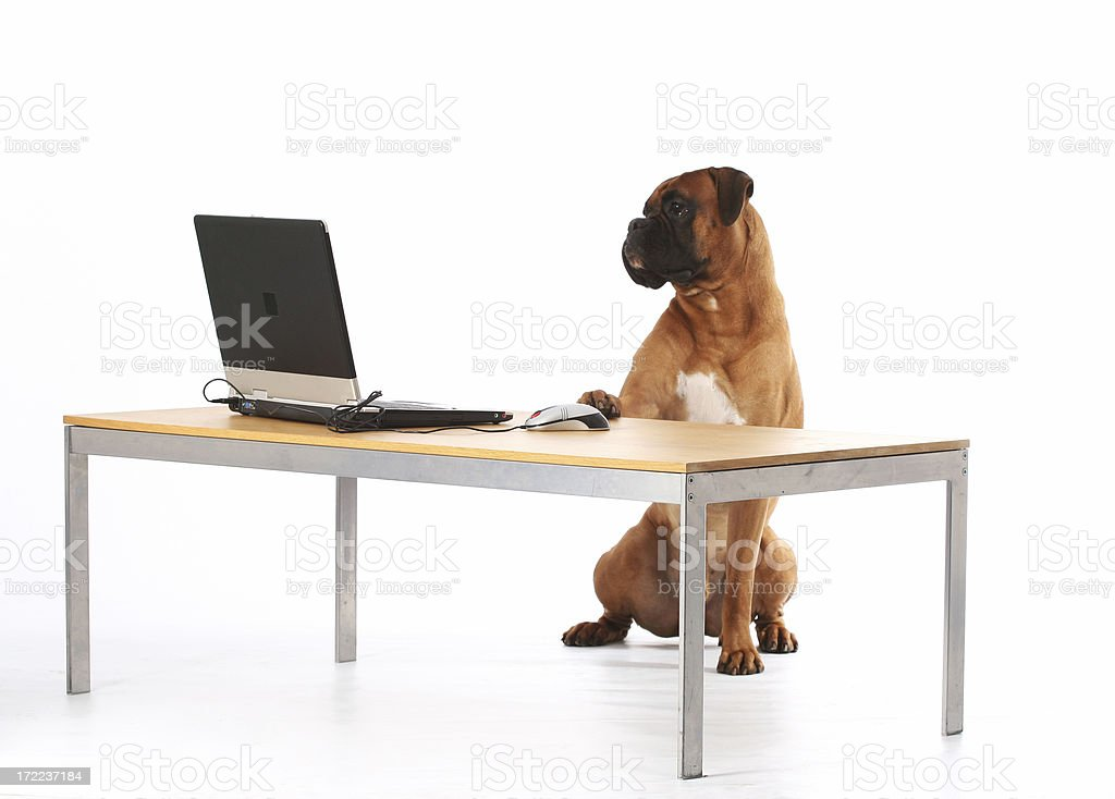 Max at his workplace royalty-free stock photo