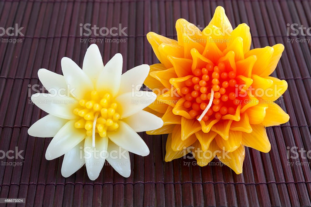 Maxican sunflower and Gazania candle flower royalty-free stock photo