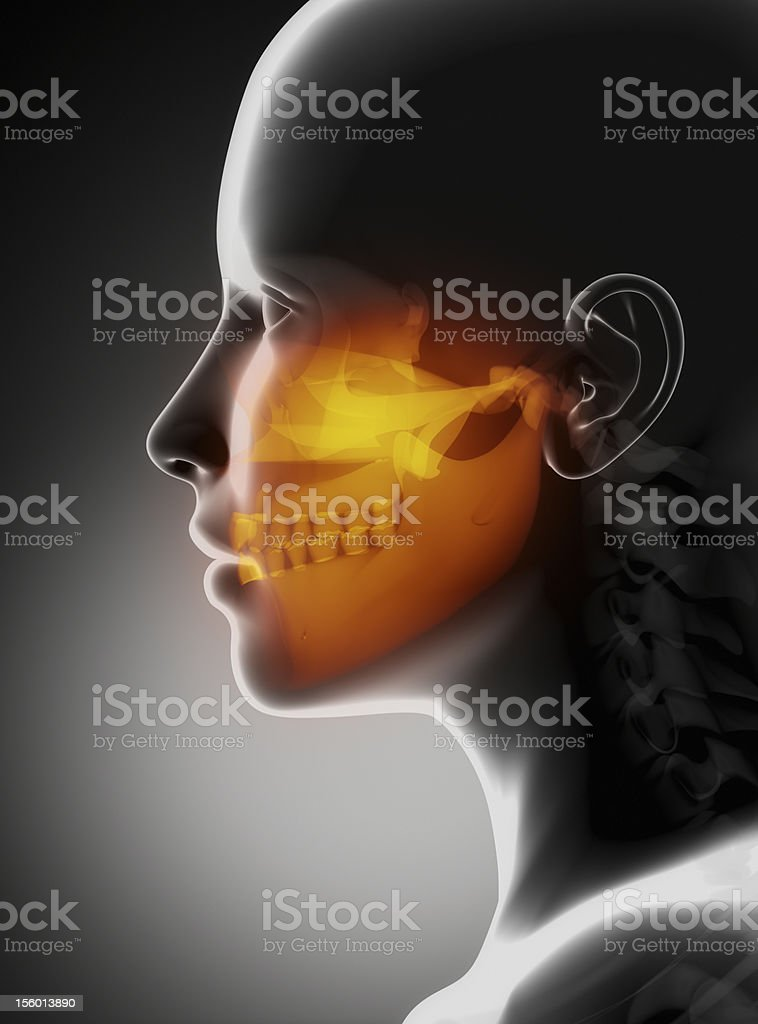 Maxillofacial concept x-ray jaws royalty-free stock photo