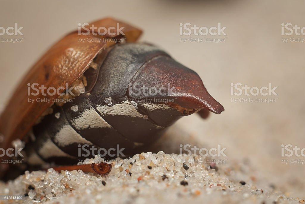 May beetles beach stock photo