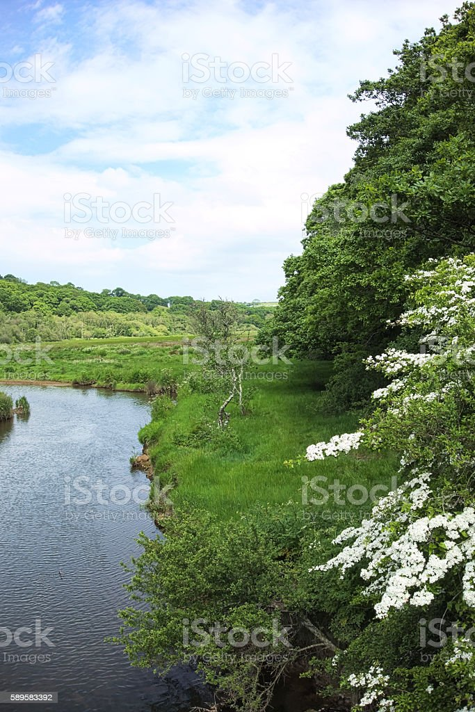 May blossom overhanging the River Fal stock photo