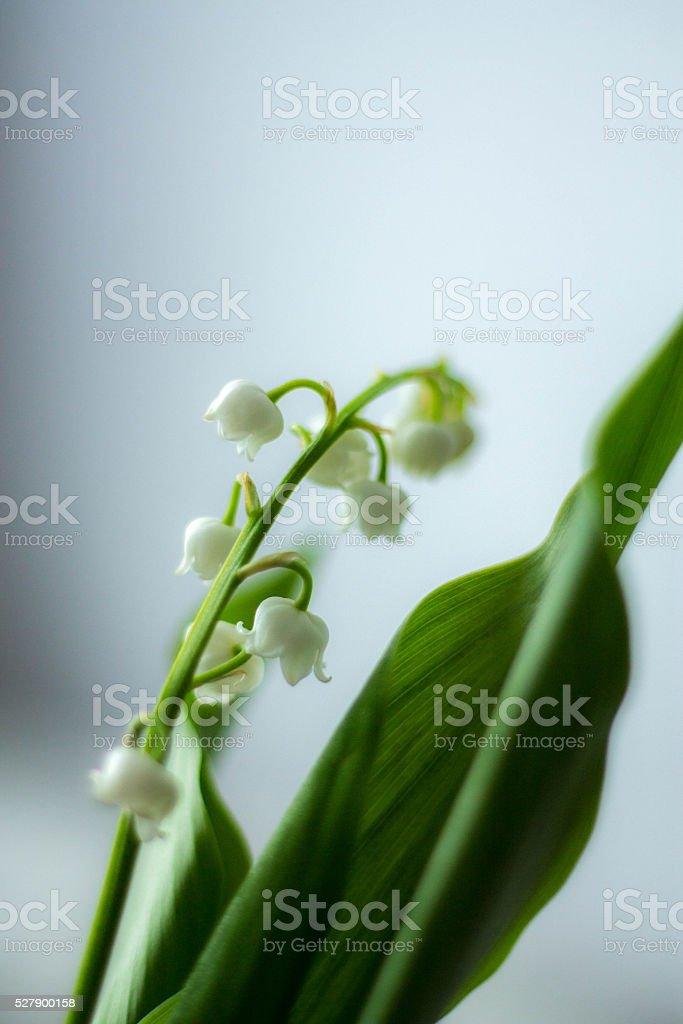 May Day stock photo