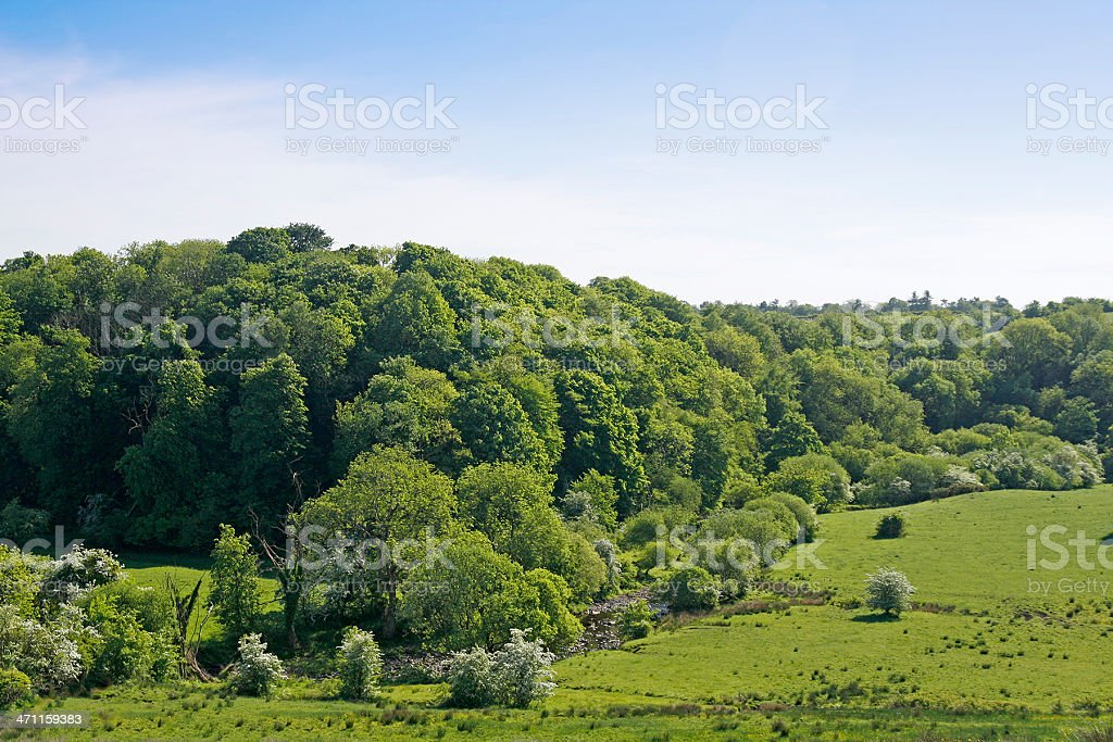 May landscape royalty-free stock photo