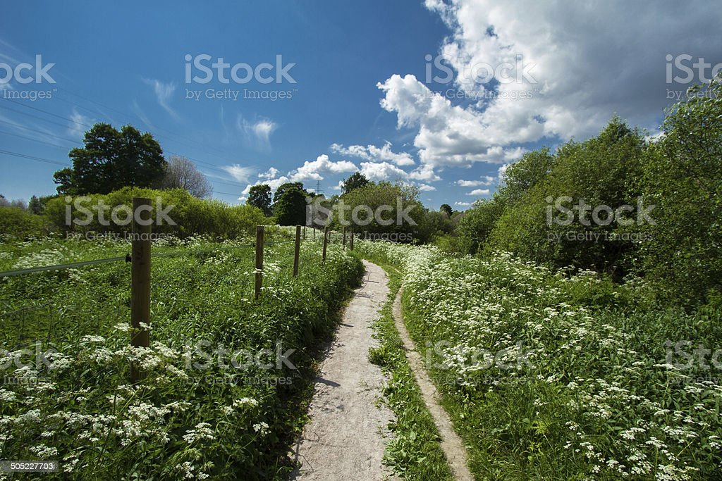 May meadow stock photo