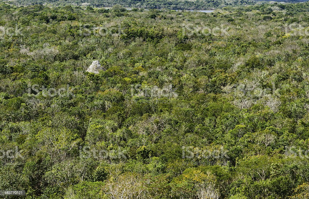 Mayan Pyramid in tropical rainforest stock photo