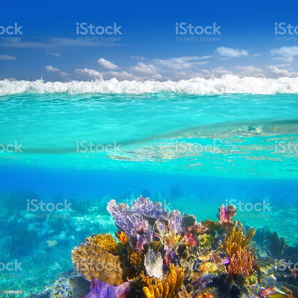 Mayan Riviera coral reef underwater up down waterline stock photo