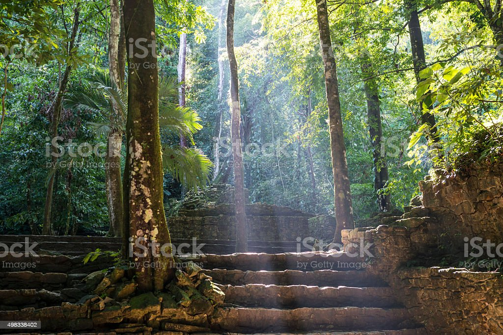 Mayan ruins and jungle in Palenque, Mexico stock photo