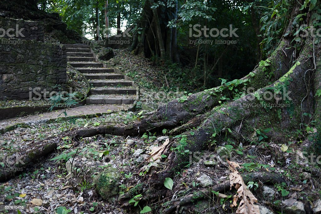 Mayan ruins in Palenque, Mexico stock photo