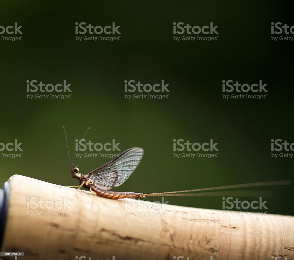 Mayfly on Fising Rod Handle royalty-free stock photo