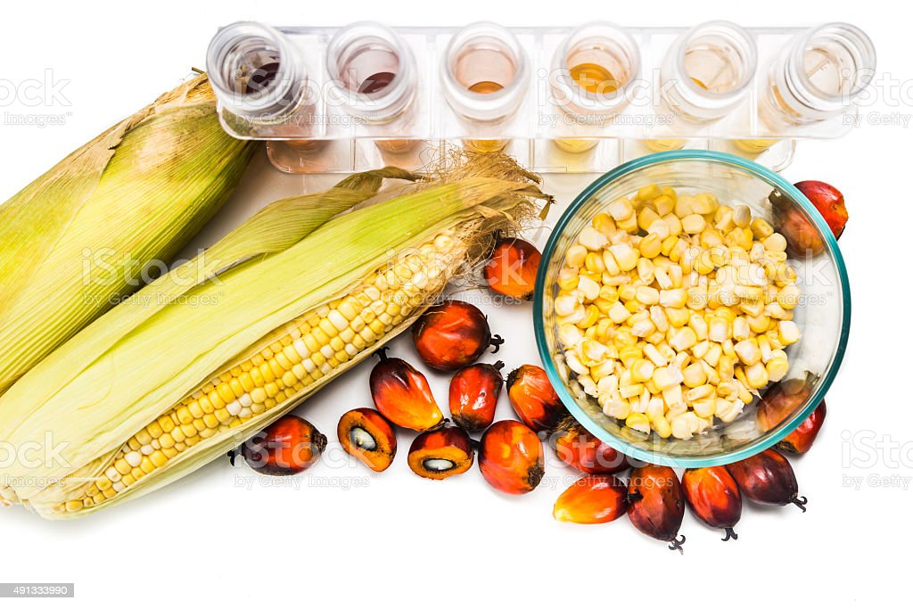 Maze corn and oil palm derived biofuel in test tubes. stock photo