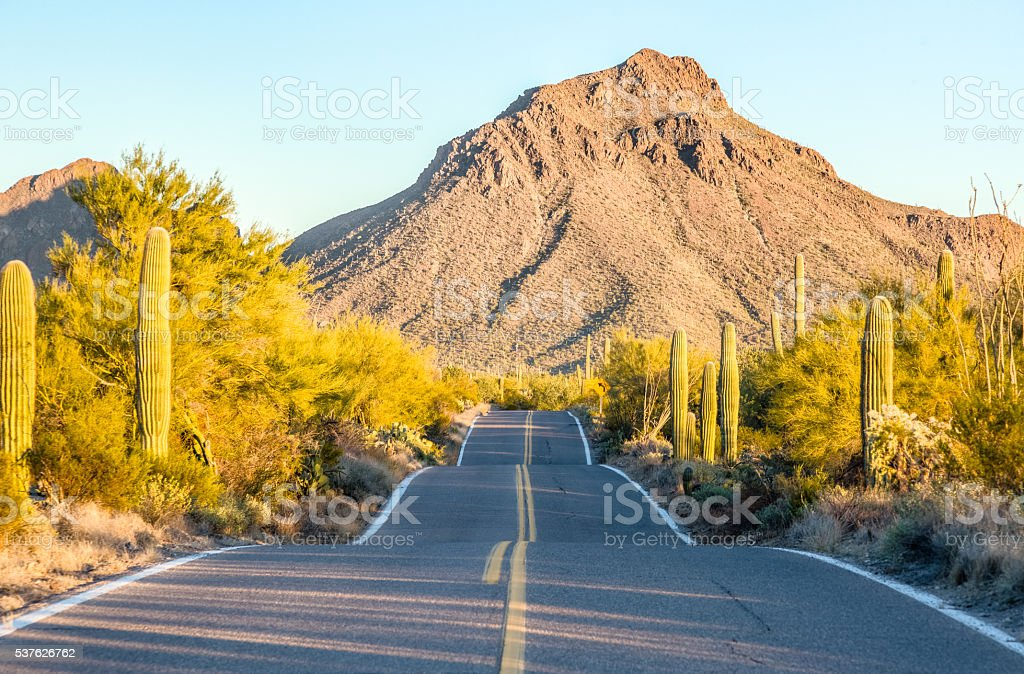 McCain Loop Road, Saguaro National Park West - Early Morning stock photo