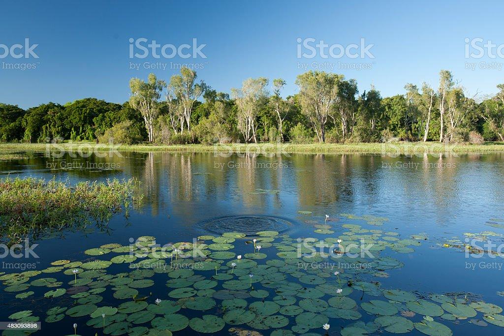 McCreadies Billabong near Litchfield National Park stock photo