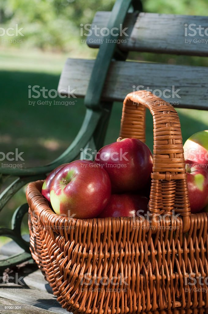 McIntosh Apples in an Antique Basket stock photo