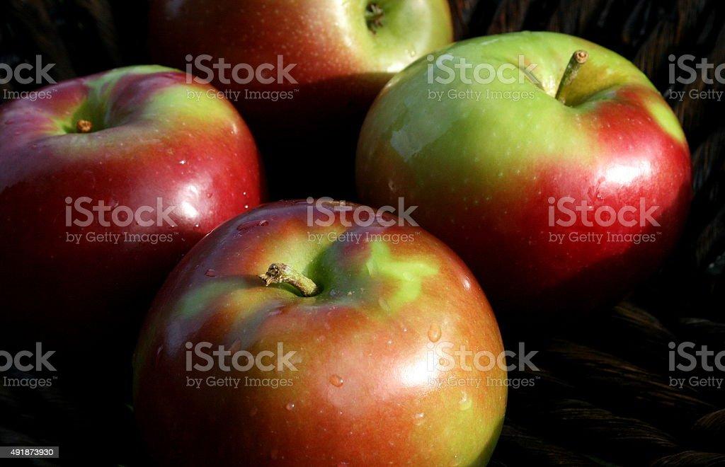 Mcintosh apples stock photo