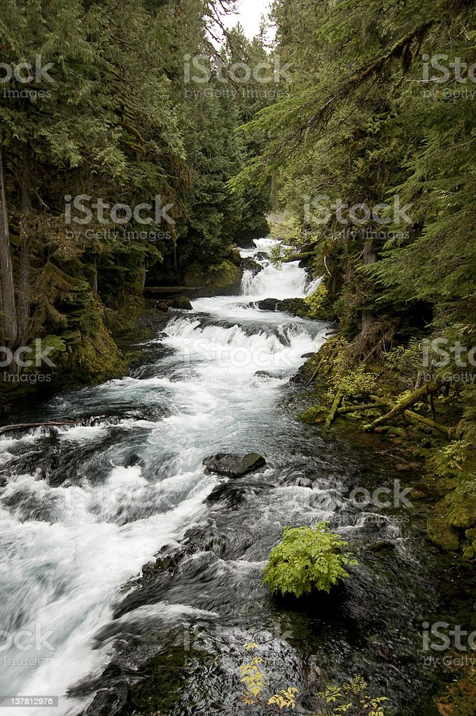 Río McKenzie, Oregon foto de stock libre de derechos