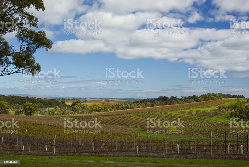 McLaren Vale Vineyards South Australia royalty-free stock photo