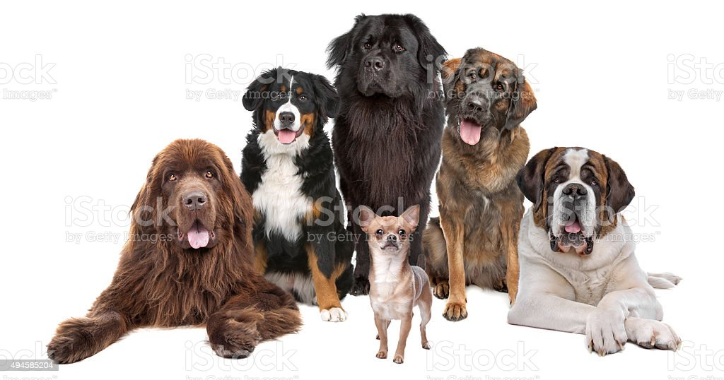 me and my big friends stock photo