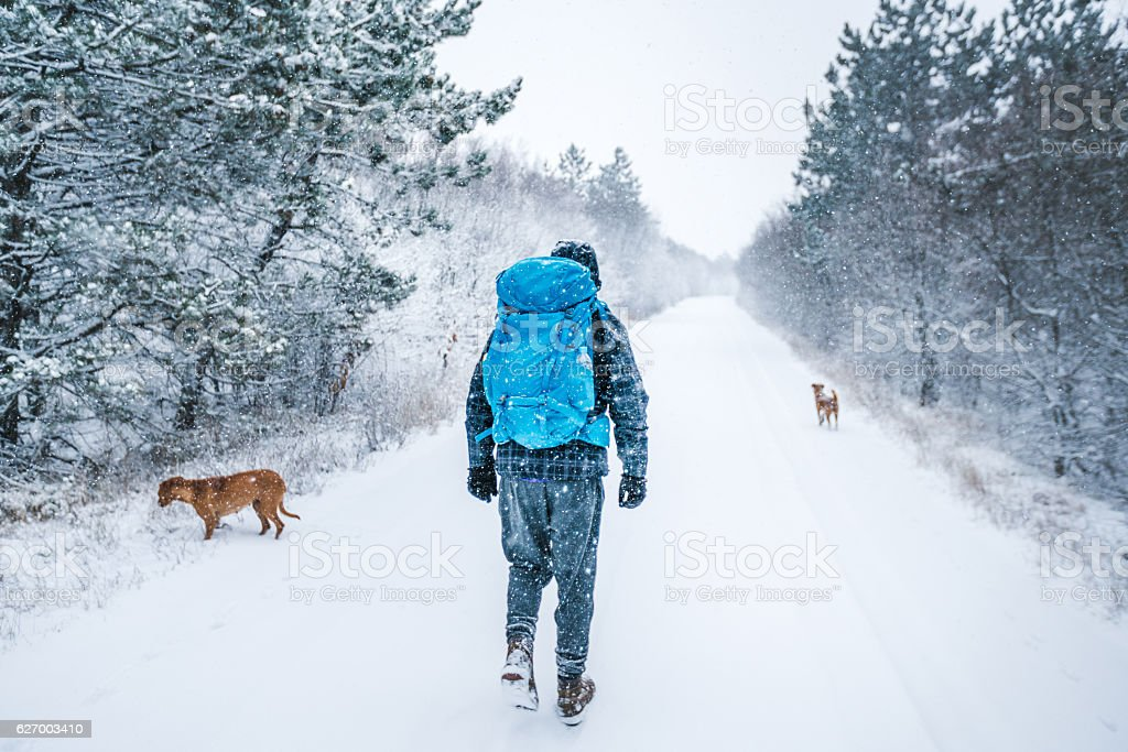 Me and my dogs on snow stock photo