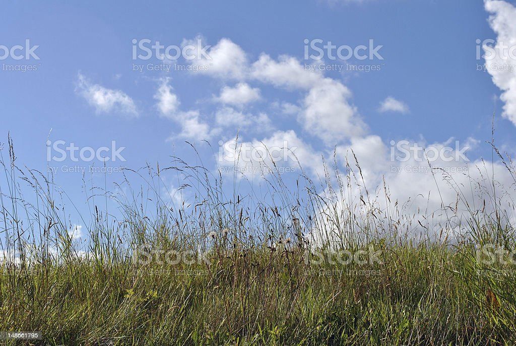 meadow and blue sky royalty-free stock photo