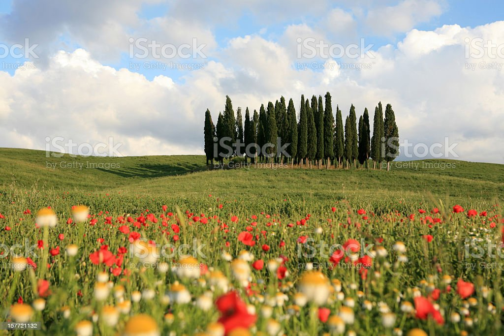 Meadow and cypresses in Val d'Orcia, Tuscany Italy royalty-free stock photo
